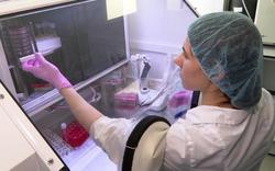 Nga - Mỹ và cuộc chạy đua tìm kiếm vaccine Covid-19