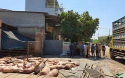 Huế: Phát hiện hàng chục con lợn chết nằm la liệt chờ trước lò mổ