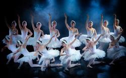 Hoãn lưu diễn vở Ballet Hồ Thiên Nga