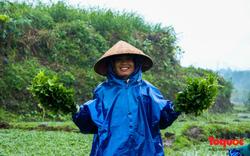 Nông dân đội rét thu hoạch