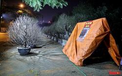 Người dân dựng lều, thức trắng đêm trông đào trên vỉa hè Hà Nội