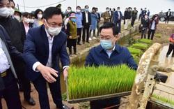 Ảnh: Bí thư, Chủ tịch Hà Nội đi cấy lúa cùng bà con nông dân