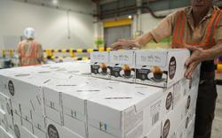 Nestlé Việt Nam đầu tư 132 triệu USD để tăng gấp đôi công suất chế biến
