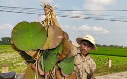 Thừa Thiên Huế phát triển trồng sen theo hướng đi bền vững