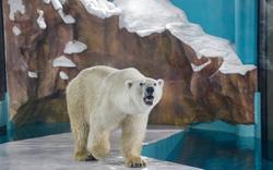 Bất ngờ xuất hiện khách sạn gấu Bắc Cực đầu tiên trên thế giới