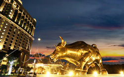 Bất ngờ hình ảnh chú bò tót vàng độc đáo xuất hiện tại Hạ Long