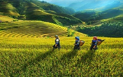 Kiện toàn Ban chỉ đạo Trung ương Chương trình Mục tiêu quốc gia phát triển kinh tế xã hội vùng đồng bào dân tộc thiểu số, miền núi