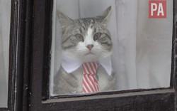 Người đứng sau Wikileaks: Chủ nào mèo nấy