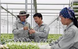 VinGroup hỗ trợ 350 triệu đồng/hộ dân trồng rau sạch