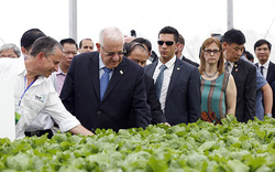 """Tổng thống Israel khen rau VinEco """"ngon và tuyệt vời"""""""