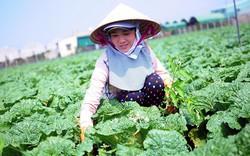 Vingroup ký thỏa thuận hợp tác với 500 hộ sản xuất nông nghiệp