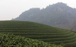 Mộc Châu được quy hoạch thành khu du lịch cấp quốc gia