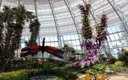 Đồi Vạn Hoa, công viên thực vật 5 châu của Việt Nam có gì lạ?