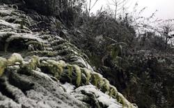 Ngày 2/2: Không khí lạnh tăng cường trở lại