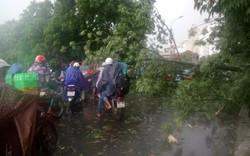 Bão số 10: Cây đổ đè xe biển xanh, Quảng Trị và Thừa Thiên – Huế cho học sinh nghỉ học