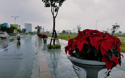 Chủ tịch Đà Nẵng cảm ơn người dân nhanh chóng dọn dẹp sau bão
