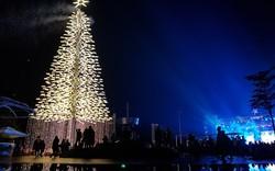 Thắp đèn cây thông pha lê cao 30 mét