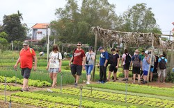 Du lịch sinh thái nông nghiệp là điểm nhấn thu hút, thúc đẩy tăng trưởng du khách