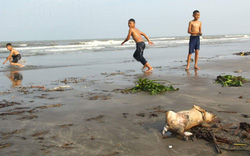 Bãi biển ở Nghệ An ngập trong rác
