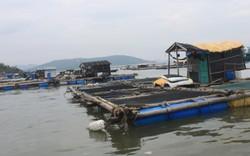 Cá chết bất thường ở Thanh Hóa: Do nước ô nhiễm