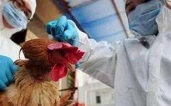 Trung Quốc phát hiện thêm 4 ca lây nhiễm mới H7N9