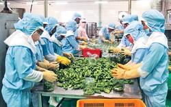 Việt Nam đứng thứ 4 trong thị trường nhập khẩu nông sản Hàn Quốc
