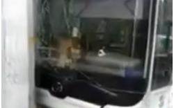 Kinh hoàng: Xe buýt lao thẳng bến chờ, đốn nhiều người thương vong