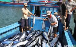 Tăng cường quản lý ngư nghiệp bền vững giữa Việt Nam và Indonesia