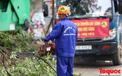 Hà Nội: Mới chỉ di chuyển 14 cây xanh trên đường Phạm Văn Đồng