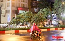 Hà Nội: Gió lốc giật mạnh quật đổ hàng loạt cây xanh