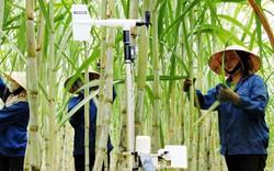 Báo Nhật ấn tượng Việt Nam đón đầu công nghệ trong kinh tế
