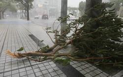 Đối phó bão Trami: Nhật Bản cảnh báo toàn quốc