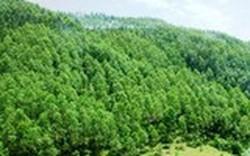 Tập trung thực hiện 3 nhiệm vụ phát triển lâm nghiệp bền vững