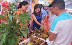 Tối nay khai mạc Lễ hội Sâm Ngọc Linh tại Quảng Nam