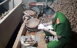Trộn đất đỏ biến khoai tây Trung Quốc thành khoai tây Đà Lạt