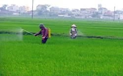 Phó Thủ tướng Trương Hòa Bình yêu cầu kiểm tra khiếu nại về đất đai ở Ninh Bình