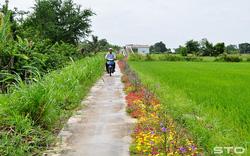 Điều chỉnh quy hoạch, đất nông nghiệp của Sóc Trăng sẽ chiếm 79,44%