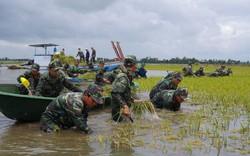 Nhận định lũ lớn trên sông Cửu Long, cả ngàn ha lúa ngoài đê bao thiệt hại