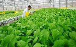 Chính phủ ban hành loạt chính sách khuyến khích phát triển nông nghiệp hữu cơ