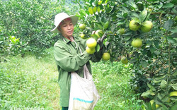 Thủ tướng đồng ý chuyển 14,3 ha đất trồng lúa sang đất phi nông nghiệp tại Nghệ An