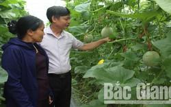 Thủ tướng đồng ý việc Bắc Giang chuyển 21,5 ha đất trồng lúa sang đất phi nông nghiệp