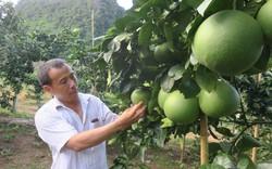 Thủ tướng Chính phủ sẽ chủ trì Hội nghị  trực tuyến toàn quốc về nông nghiệp, nông dân, nông thôn