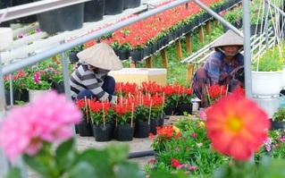 """Làng hoa Sa Đéc rực rỡ ngày cận Tết và sự """"chịu chơi"""" của người miền Tây: Chi gần 1 tỷ để """"có view"""" ngắm hoa đẹp"""
