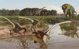 Phát hiện loài chim khủng long cách đây 67 triệu năm, có sức mạnh sánh ngang báo gê-pa