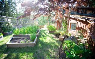 Cô gái xinh đẹp luôn tràn ngập năng lượng hạnh phúc khi trồng cả khu vườn toàn rau quả sạch
