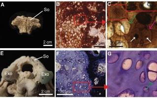 Phát hiện ra dấu vết hóa học DNA trong hóa thạch khủng long 75 triệu năm tuổi