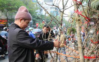 """Đào Sơn La dán tem xuất xứ """"đổ bộ"""" Thủ đô Hà Nội"""