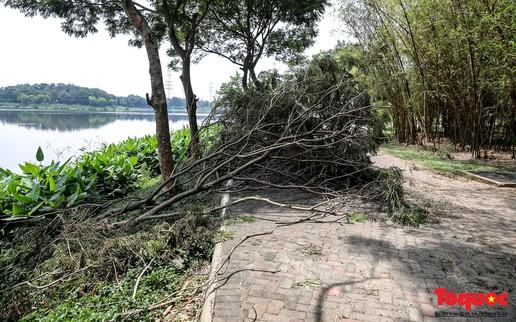 Công viên Yên Sở (Hà Nội): Cây đổ la liệt, cá chết và rác thải nổi lềnh bềnh trên mặt hồ