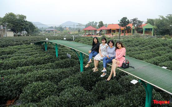 Mô hình sản xuất chè kết hợp du lịch trải nghiệm góp phần nâng tầm đặc sản chè Thái Nguyên