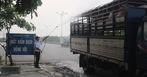 Thừa Thiên Huế ghi nhận điểm dịch tả lợn Châu Phi thứ 2